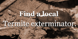 termite exterminator
